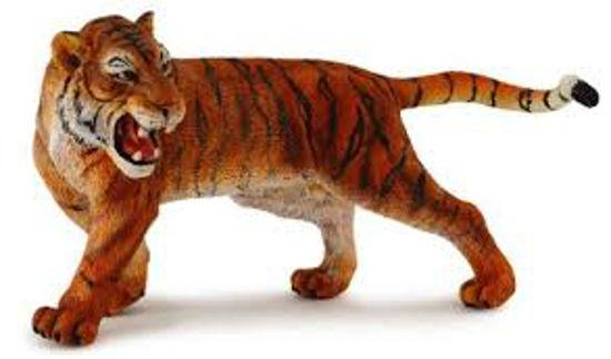 Obrázek z Tygr sibiřský
