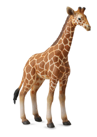 Obrázek z Žirafa - mládě