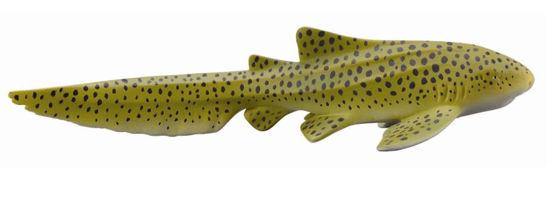 Obrázek z Žralok zebrovitý