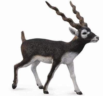 Obrázek Antilopa jelení